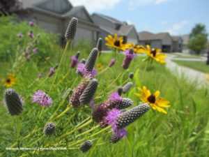 Low Maintenance Native Plants for Pollinators @ Nebraska Builders Home & Garden Show | Lincoln | Nebraska | United States